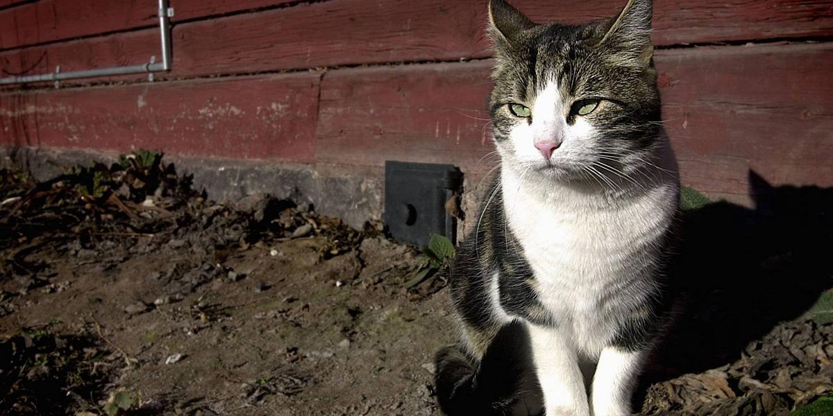 hur håller man katter borta från tomten