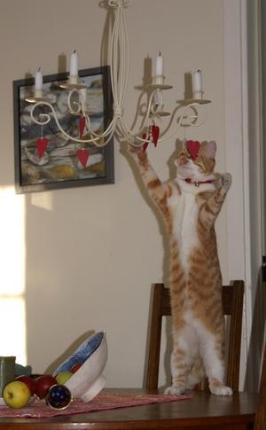 Vår katt Jedi ville gärna ta ner våra hjärtan i ljuskronan,men lyckades bara ha omkull fruktskålen!