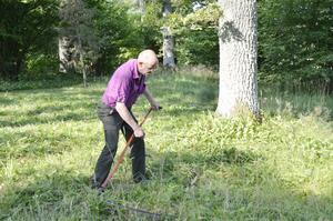 Slår gräset. Leif Pettersson slår kvadrat efter kvadrat med lien. Det går utmärkt, säger han.