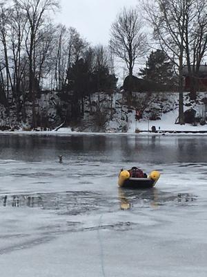 Personal vid Räddningstjänsten DalaMitt i Borlänge på väg ut till rådjuret som gått genom isen.