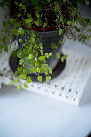 Gröna växter i olika strukturer och storlekar skapar hemtrevnad.