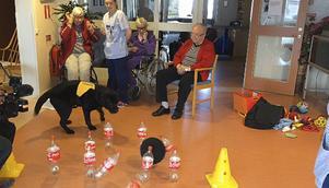 Doris Carlsson försöker överlista terapihunden Neo i kägelspel