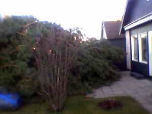 Trädet hamnade en halv meter från vardagsrummet.0,50m från vardagsrummet. Årbyvägen.