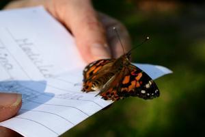 Flera av fjärilarna tog tid på sig innan de tog farväl.