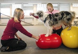 När hundarna, som Naldo har god kontroll går det att utöka till banor med flera bollar.