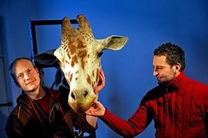 Kaj Steveman (t h) tillsammans med giraffen Jeff och Niklas Hermansson, projektledare för giraffhuvudet.Foto: Pontus Lundahl/Scanpix