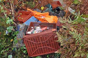 MATRESTER. De lämnade till och med korv kvar på platsen. De handlar om 30 utländska bärplockare som nyligen gett sig av från skogarna vid Mehedeby.