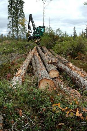 Det är tufft att vara skogsmaskinentreprenör i dag. Många säljer också av maskiner medan andra går i konkurs. Foto: Hans-Råger Bergström