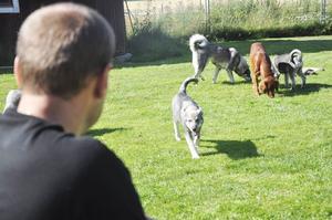 Det finns många sätt att roa hundarna på för Fredrik, som att kasta ut en näve hundgodis.