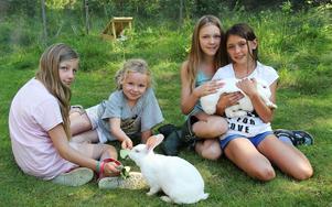 Alva Klint, 10 år, Bella Lindroth, 8 år, Moa Klint, 12 år och Ida Sunnerstig, 10 år, klappar och matar kaninerna.