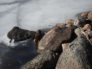 Bilden är tagen i veckan i Dala-Floda, närmare bestämt sjön Närsen. Jag fångade ett (för mig) oidentifierat djur, som syns nere på isen. Foto: ELIN LEO