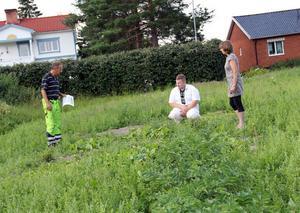 Sven Jansson, Patrik Eriksson och Kerstin Stenbeck från RättvisAlfta ligger bakom projektet Odling för omställning.