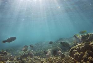 Nya Kaledonien omgärdas av världens största lagun som erbjuder dykning och snorkling i världsklass.