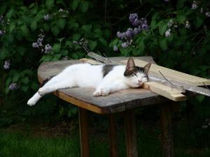 En slapp stund i trädgården
