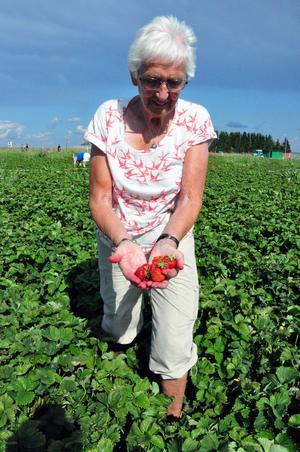Britta Persson från Östersund, visar upp en näve jordgubbar.