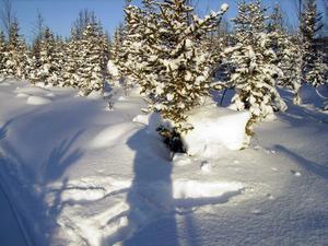 Vinterskugga.