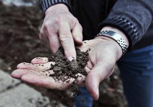 Knep. Rullar man jorden i handflatan ska den inte bli en lerkorv utan falla sönder. Foto: Tony Persson