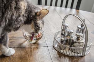 En törstig katt...