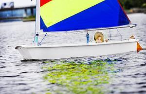 10-åriga Lina Larsson från Frösön är en av de sju deltagarna som började seglarskola i Storsjön på måndagen. Det är mycket att hålla reda på i början: man ska få seglet att bete sig som man vill och samtidigt lyckas styra åt rätt håll med rodret.