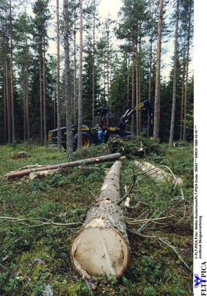 Avverkning i skottglugg. Skogsnäringen får kritik för att förstöra naturen och lämna efter sig plantager.
