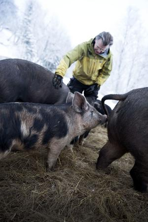 Glada grisar ger godare kött, anser Micke Blyckert.