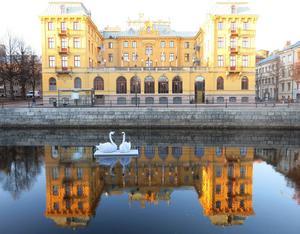 Ett av tre jul-svanpar i Gavleån. Här utanför Länsmuseet, övriga vid biblioteket och nedanför slottet.