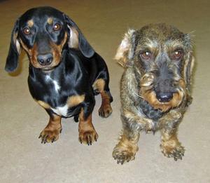 En kärvänlig hund ger terapi som passar både för kroppsliga och psykiska besvär. Med en vårdhund kortas vårdtiden och halten stresshormon sjunker i kroppen