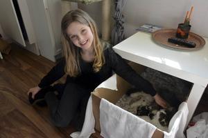 En av katterna fick familjen behålla eftersom den hade gått ut när branden startade. Alldeles nyligen fick hon dessutom fyra ungar.