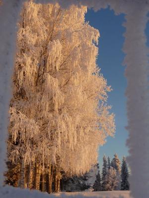 En frostig inramning av vintern när den är som bäst.