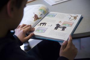 mer till skolan. I vårt budgetförslag får skolan 72,2 miljoner mer än i den Moderatledda koalitionens budget för perioden. Det är ett av våra förslag att göra Norrtälje kommun bättre och skapa en bättre framtid, skriver Ulrika Falk.Foto: Fredrik Sandberg, TT