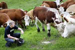 En stor skillnad mellan kött som föds upp och slaktas konventionellt jämfört med ekologiskt är kraven på djurens hälsa.