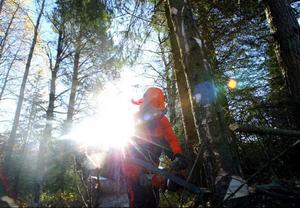 Många av de utländska skogsarbetarna som arbetar i de jämtländska skogarna har ingen skyddsutrustning, visar färsk rapport.