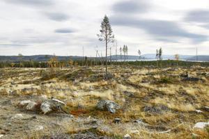 Norr om Håckren stod till för några år sedan riktigt gammal tallskog med höga naturvärden. Avverkningen skedde med större naturhänsyn än lagen kräver.