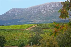 Sydafrikas viner har sedan apartheidsystemet avskaffades 1994 gjort ett segertåg över världen. Sverige hör till landets viktigaste marknader.