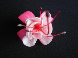 Denna blomma hade lossnat från sitt fäste och jag tyckte den gjorde sig bra mot en svart bakgrund.