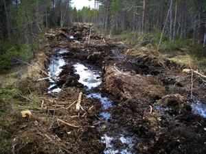 De djupa spåren riskerar att dränera                  en av Sveriges värdefullaste myrmarker vid Svartsjöarna utanför Östersund. Foto: LänsstyrelsenSkogsområdet där avverkningen  har skett i vinter ligger nära Bjärme på högplatån där även Svartsjöarna ligger.