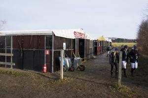 Med 300 startande hästar så har Sundsvalls Ridklubb fått bygga upp stora provisoriska stallplatser för alla besökare som behöver det.