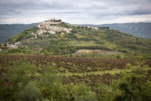 Bergsbyn Motovun är Kroatiens tryffelhuvudstad.