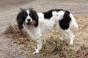 Hunden Ellie, som till motsats mot sin hundkompis Esther inte känner av när hennes matte har lågt blodsocker.