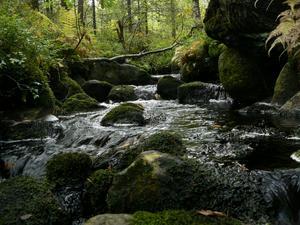 En oas i svampskogen.