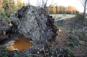 I närheten av Bollegården utanför Bollnäs hade ett stort träd rasat.