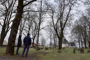 Almsjukan riskerar att slå till på Knista östra kyrkogård. 15 träd ska därför sågas ner.