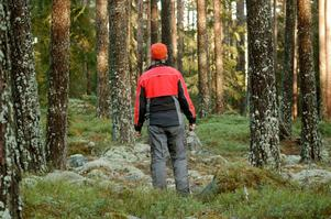 I delar av området är skogen öppen, i andra är den flerskiktad och tät.