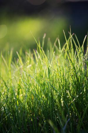 Bilden är tagen en solig eftermiddag i mars. Jag tycker själv att bilden symboliserar sommer!