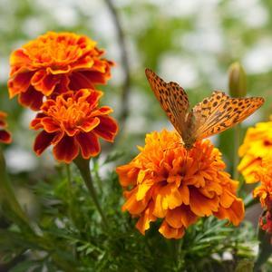 En besökare som hittade blommor i matchande färg till sig själv.