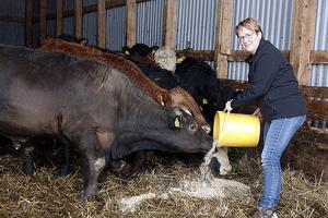 Djurskyddsgruppen hjälper jordbrukare som hamnat i kris. Både akut med djurhållningen och på sikt med att lösa deras problem.