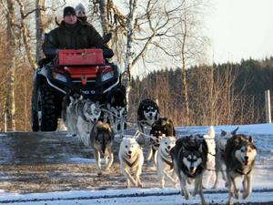 Innan det fallit tillräckligt med snö tränar Richard van Kooten hundarna med en fyrhjulig vagn. Praktikanten Nanoek följer med på turen.