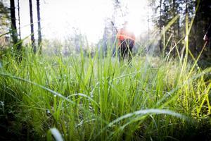I jaktlaget som Mikael Ahnström tillhör så är väckarklockan på premiärdagen ställd på ett klockslag som de allra flesta väljer att kalla natt.