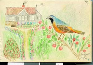 Ronny Ambjörnsson har kvar sin morfars fågelbok, med bilder från odlingslotten i Delsjön i Göteborg.   Foto: Ur Den hemliga trädgården