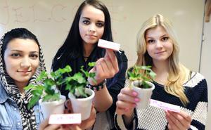 Växter reagerar olika i olika surt vatten. Hadil Hamid, Hanna Norin och Amanda Palmér.